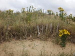 dunes fence, old hunstanton © Mari French 2011