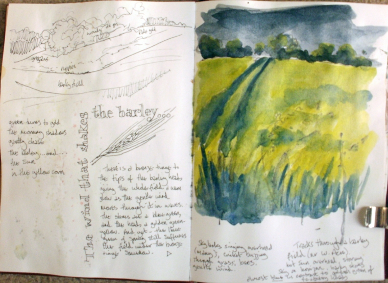 Barleyfield - sketch © Mari French 2010