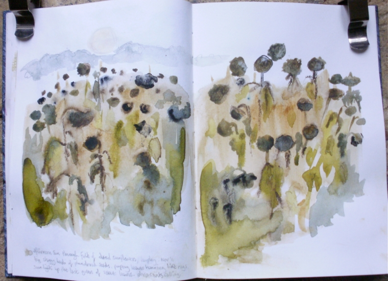 Winter sunflowers (watercolour sketch) © Mari French Nov 2011