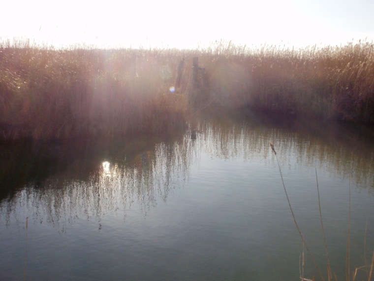 Reedbeds, Thornham Marsh (digital photo) © Mari French 2012