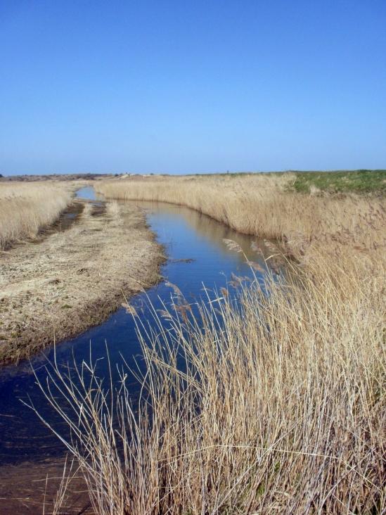 Reeds & water, Holme, Norfolk