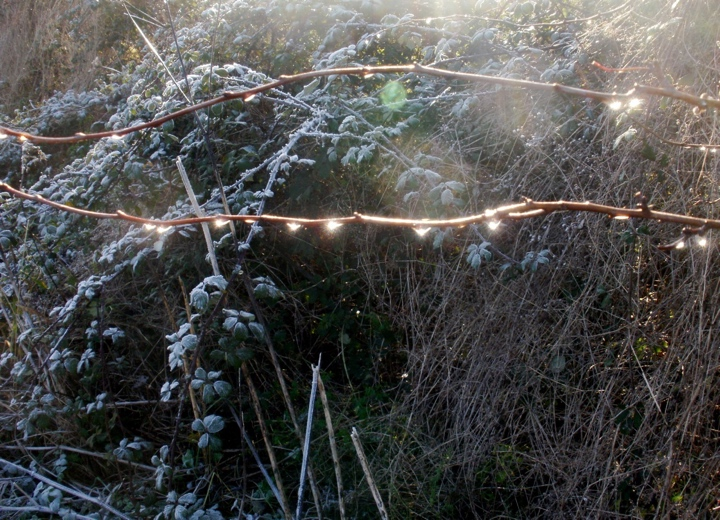 Melted frost catching the sun. Mari French 2014