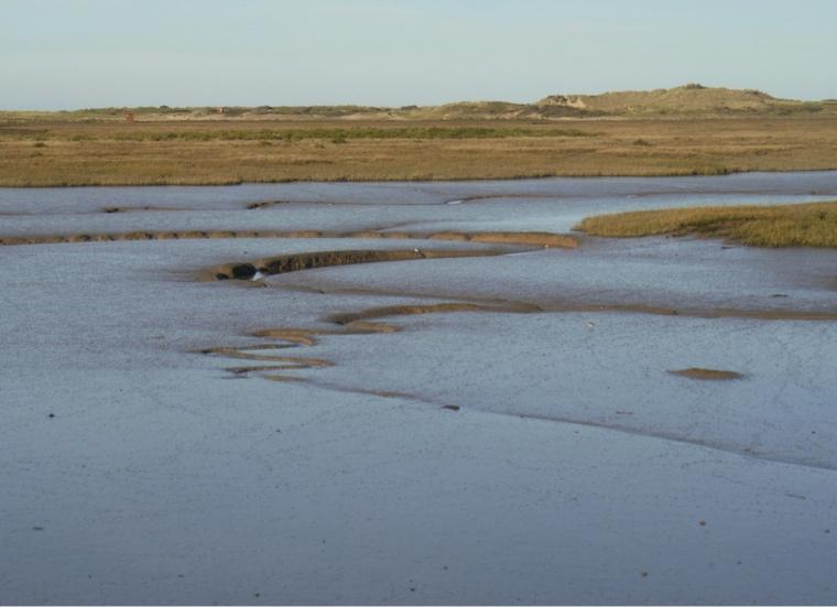 Tidal mud, Burnham Overy marsh. Mari French 2014