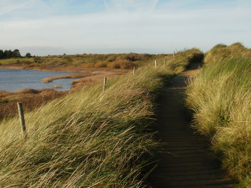 Boardwalk, Holme Dunes. Mari French 2015
