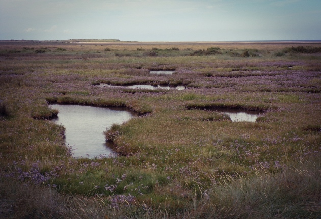 Marsh pools, Thornham Saltmarsh.